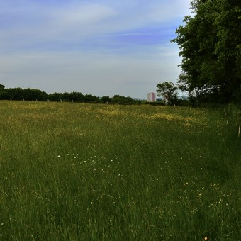 Torcy, paysages et patrimoine - Le Bois Autot - visuel 2