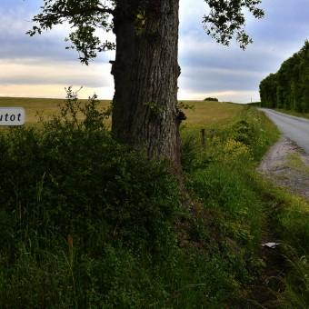 Torcy, paysages et patrimoine - Le Bois Autot - visuel 3