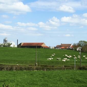 Torcy, paysages et patrimoine - Redarnay - visuel 1