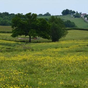 Torcy, paysages et patrimoine - Redarnay - visuel 3