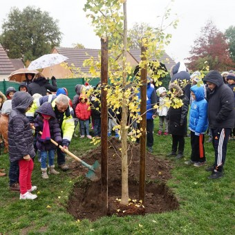 Mairie de Torcy - Un arbre de la laïcité à l'école Champ Bâtard