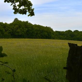 Torcy, paysages et patrimoine - Le Bois Autot - visuel 4