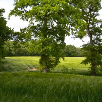 Torcy, paysages et patrimoine - Petit Boulay - visuel 4