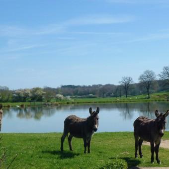 Torcy, paysages et patrimoine - Les Morlins d'en haut et d'en bas