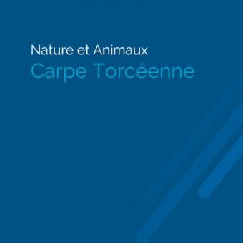 Torcy, paysages et patrimoine - Carpe Torcéenne