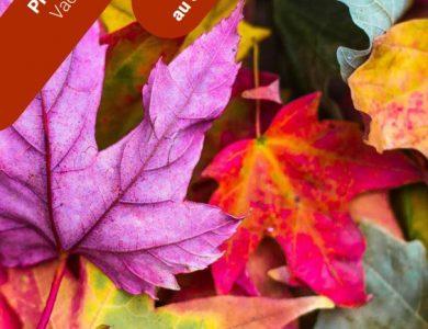 Mairie de Torcy - Programme vacances d'automne – Maison des Familles